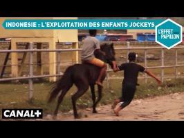 Indonésie : l'exploitation des enfants jockeys - L'Effet Papillon