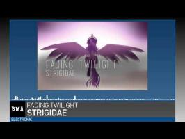 Strigidae - Fading Twilight