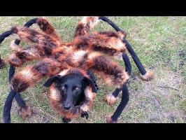 Mutant Giant Spider Dog (SA Wardega)