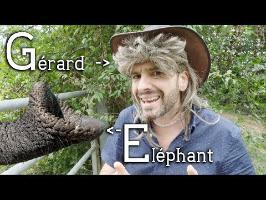Espèce d'éléphant - Culture Gérard