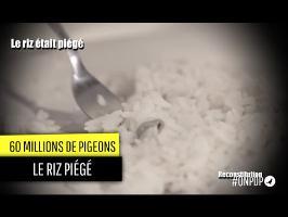 60 Millions de Pigeons : le scandale du riz
