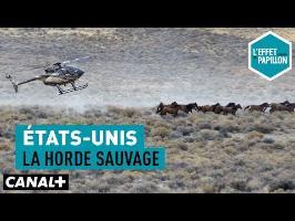 États-Unis : La horde sauvage - L'Effet Papillon– CANAL+