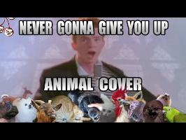 Rick asley  (Animal Cover)