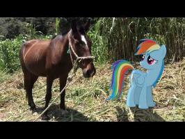 MLP: IRL - Rainbow Dash Meets a Horse! XD
