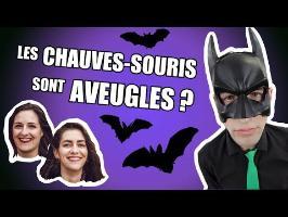 IDÉE REÇUE #29 : Les chauves-souris sont aveugles ? (feat. Camille & Justine)