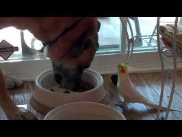 amazing bird talking to dog while he eats!