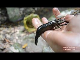 Primitive Technology: Shrimp Trap