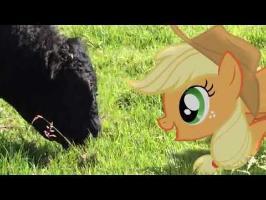 MLP: IRL - Applejack Meets a Bull
