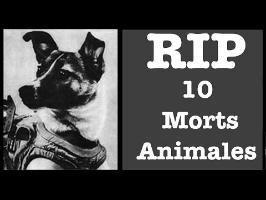 10 Morts animales - RIP#7