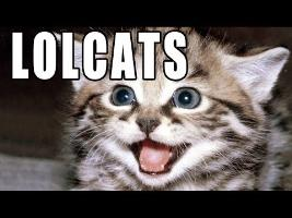 LOLCats - Memed