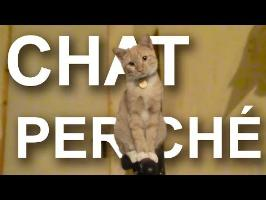CHAT PERCHÉ - PAROLE DE CHAT