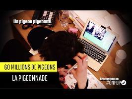 60 Millions de Pigeons: le Pigeon pigeonné