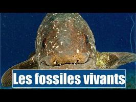 les Fossiles Vivants - IRL