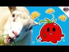 Comment MANIPULER les gens - L'effet Barnum - Jetons-leur des Tomates Pourries !