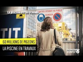 60 Million de Pigeons : la piscine en travaux