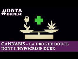 Cannabis, la drogue douce dont l'hypocrisie dure #DATAGUEULE 11