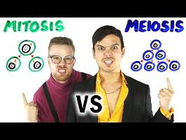 Mitosis vs Meiosis RAP BATTLE!