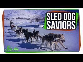 When Sled Dogs Saved an Alaskan Town