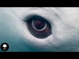 Quel effet ça fait d'être une baleine ? - DBY VLOG