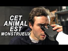 CET ANIMAL EST MONSTRUEUX !