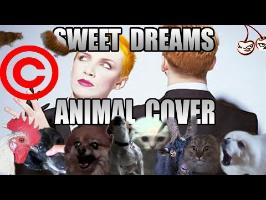 Eurythmics - Sweet Dreams (Animal Cover)