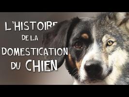 L'HISTOIRE DE LA DOMESTICATION DU CHIEN !