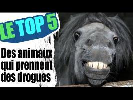 Le top 5 des animaux qui prennent de la drogue