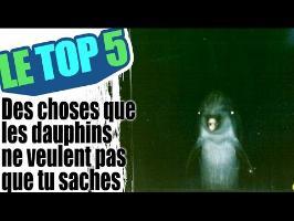Le top 5 des choses que les dauphins ne veulent pas que tu saches