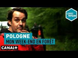 Pologne : Mon week-end en forêt - L'Effet Papillon – CANAL+