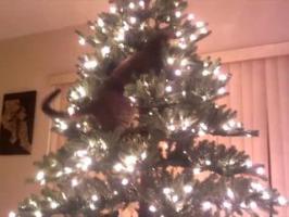Chats vs. Sapin de Noël