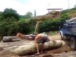 Un homme soulève un arbre