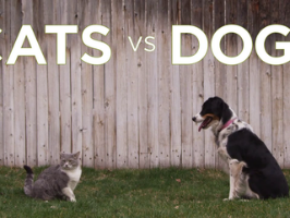 Freshpet : Cats vs Dogs