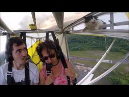 Un pilote découvre un chat dans son ULM en plein vol