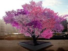 L'arbre qui fait pousser 40 fruits différents