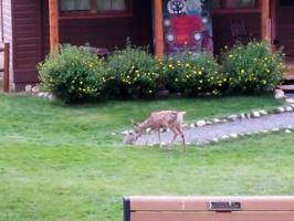 Bambi et Pan-Pan dans la vraie vie