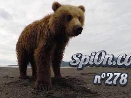 Le Zap de Spi0n n°278 - Zapping Web