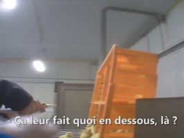 Foie gras - Dans l'enfer d'un couvoir (L214)