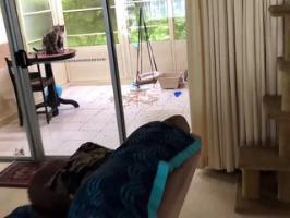 Un chat dénonce son acolyte